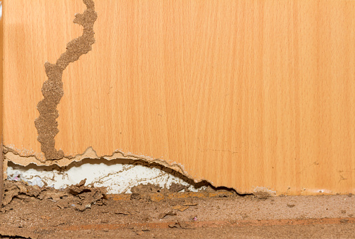 Amazing Fencing - Termites wooden fence