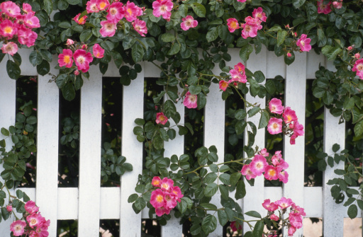 White picket fence and flowers