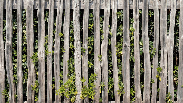 Clear foliage from around your wooden fence.