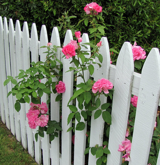 picket fence appeal and where did they come from