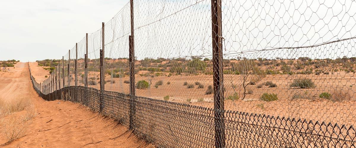 australia's dingo fence
