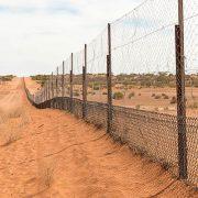 dingo fence australia