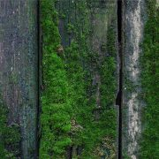 moss maintenance timber fence