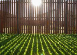 Sun shining through a wooden fence onto a grass lawn