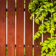 Wooden Slat Fence with Plant Overhanging